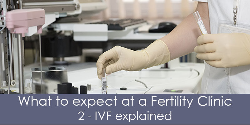 ivf process explained